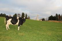 Vache avec ferme en construction (1024x683)_1